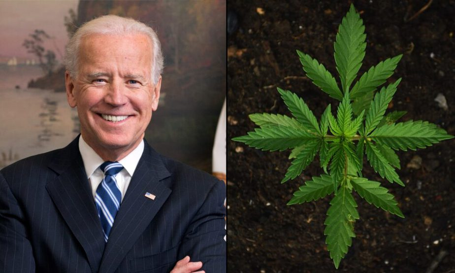 joe biden marijuana